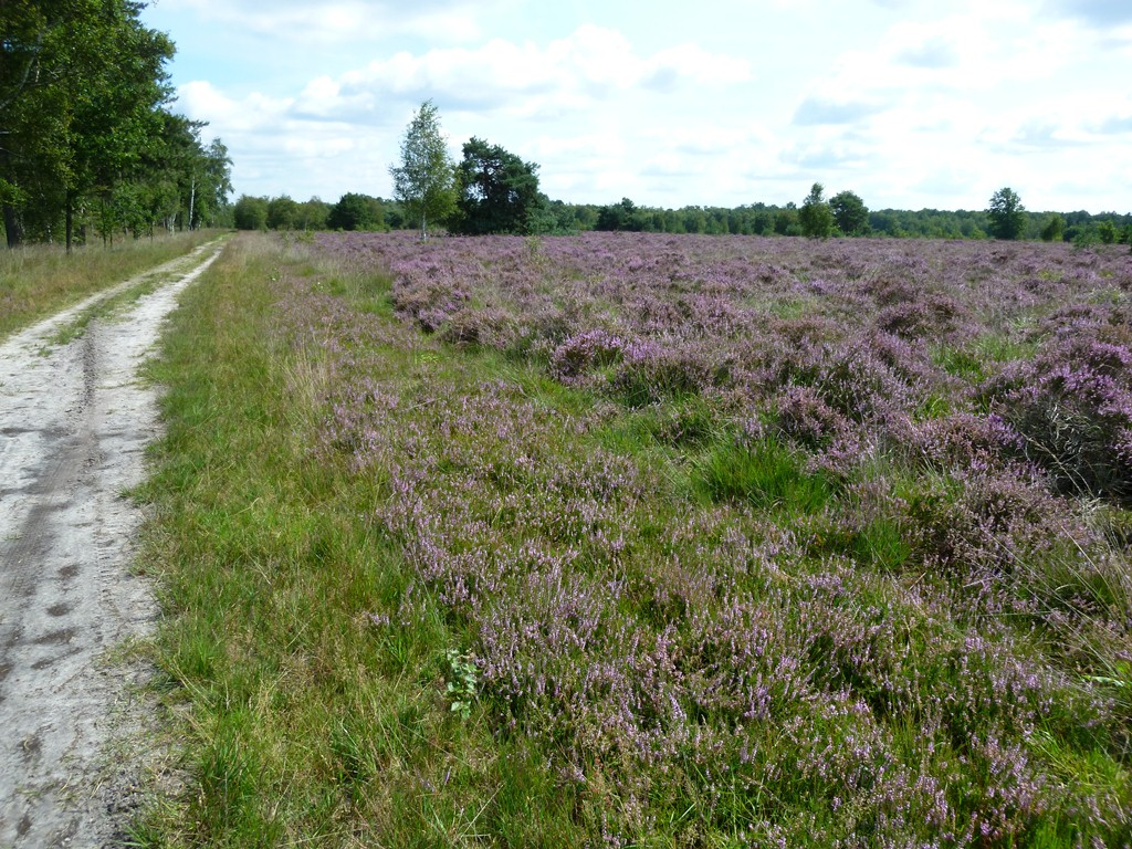 Neterselsche Heide
