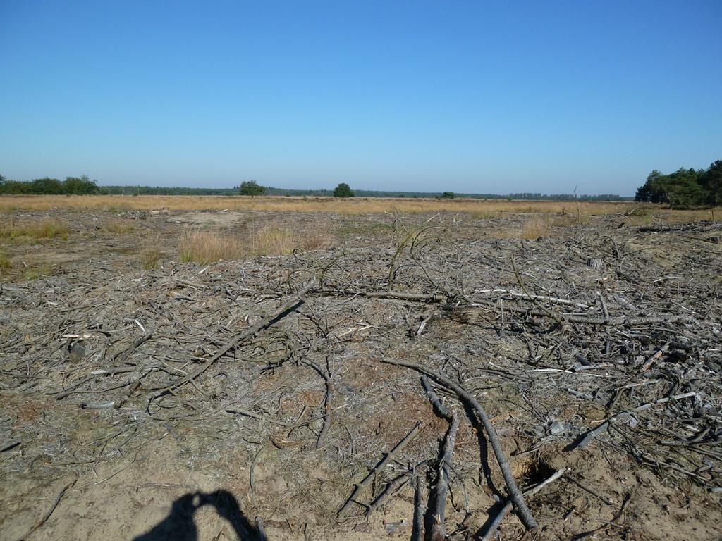 Grote Heide
