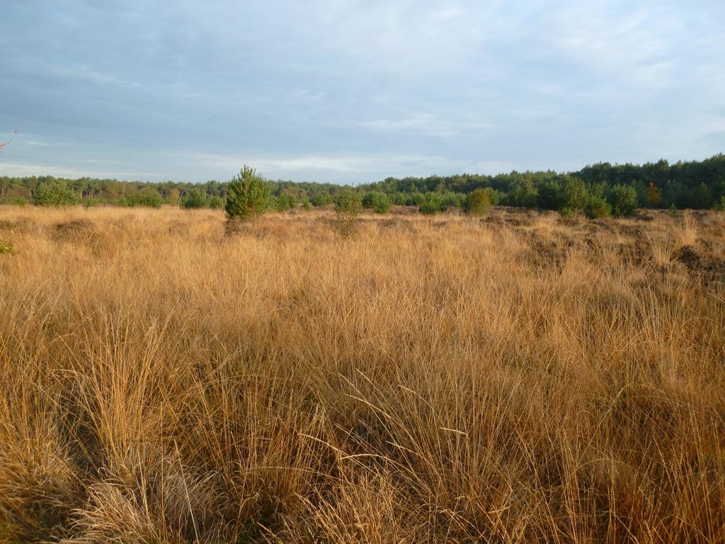 De Heide