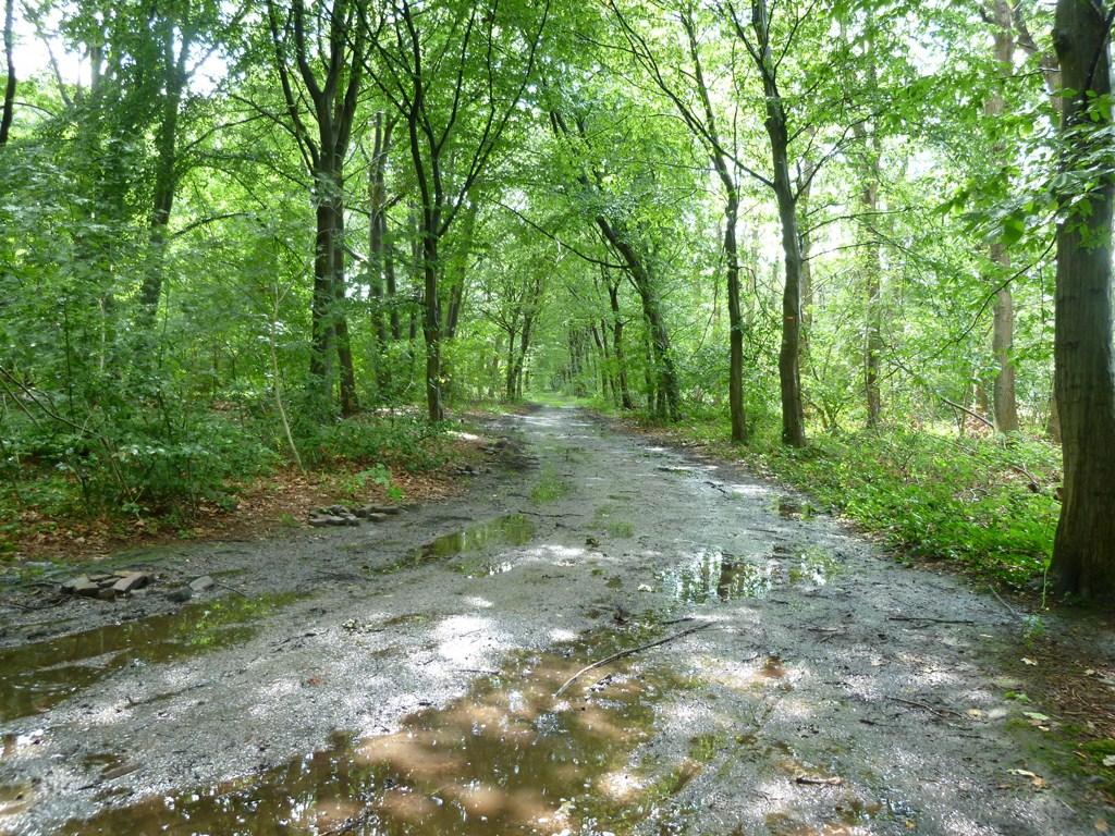 Bos bij Nietap