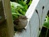 Veenhuizen - mus