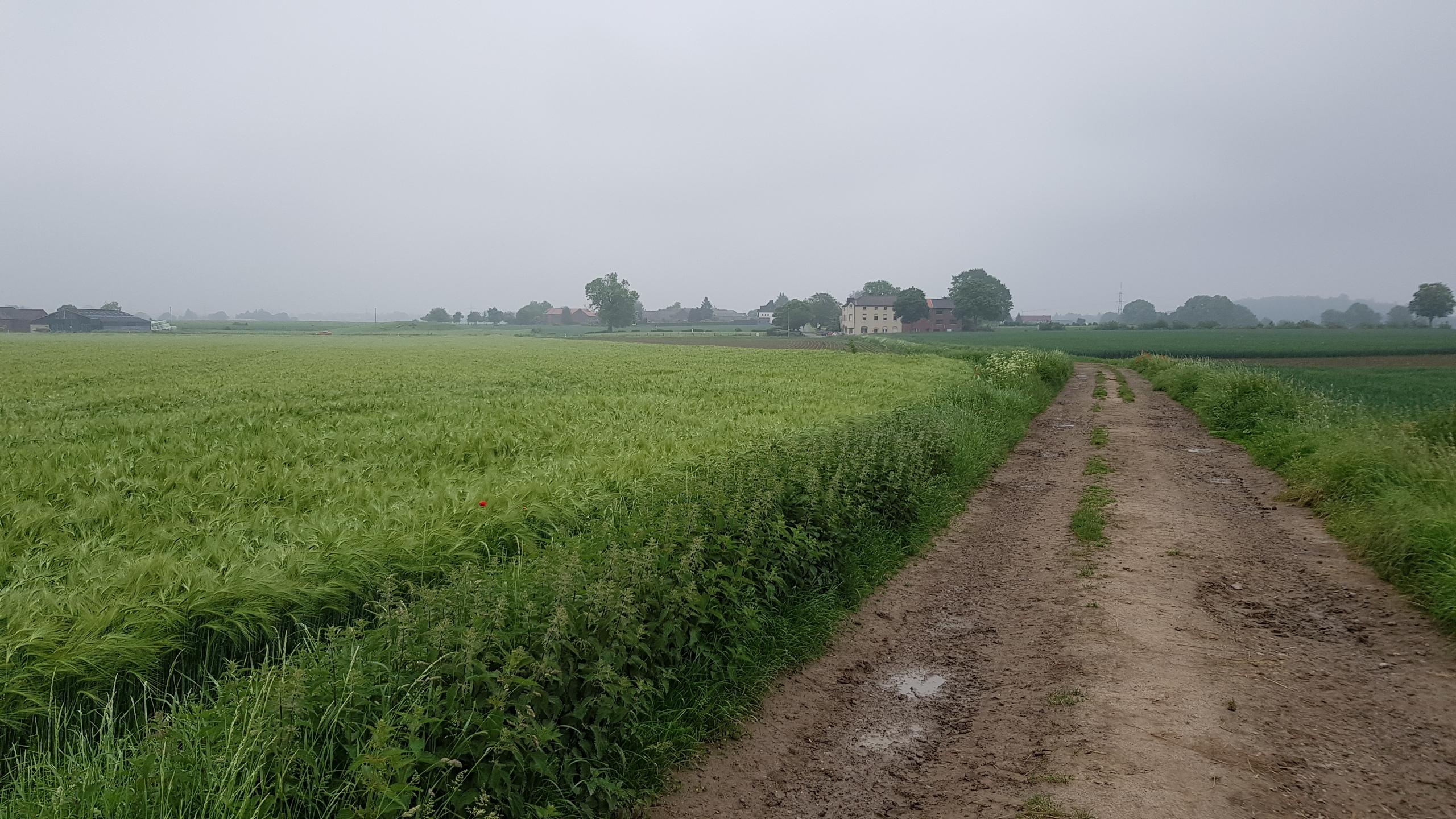Steikauler Weg