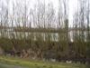 Duwboot op de Oude Maas