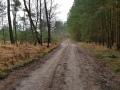 Grenspark De Zoom - Kalmhoutse Heide