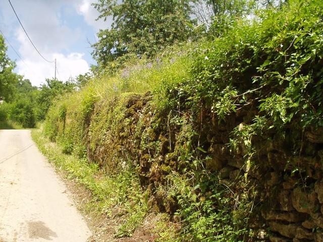Begroeide muur