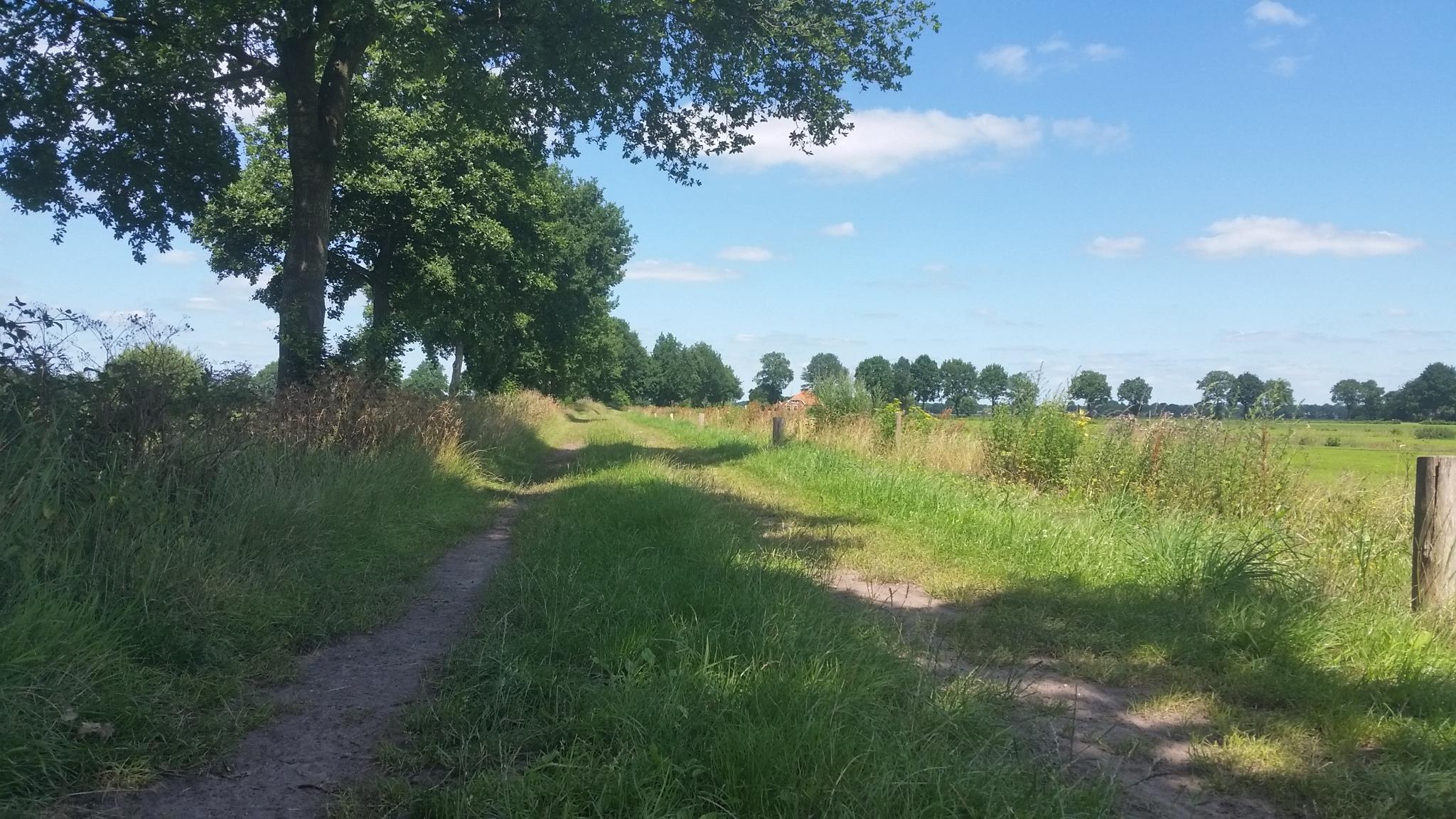 Vennootswijk