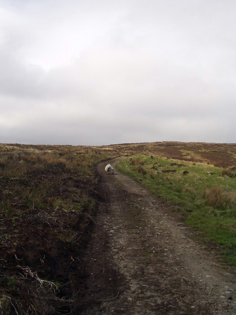 Inishowen Head walk