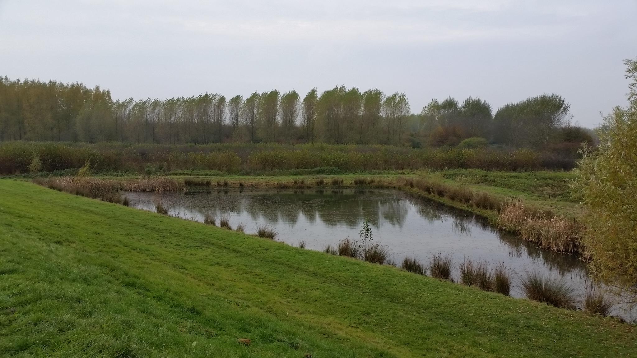 Bos Nieuw Wulven