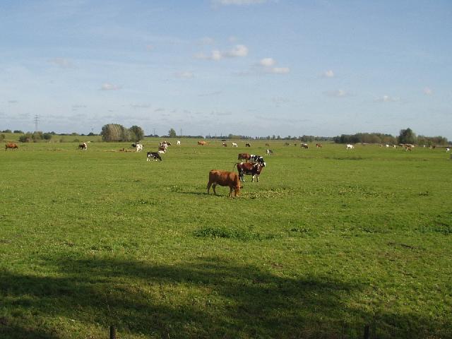Willems polder