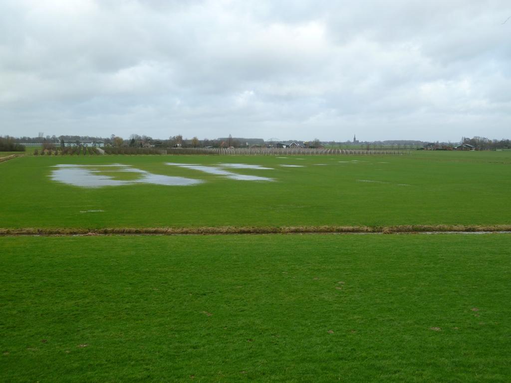 Polder bij Honswijk