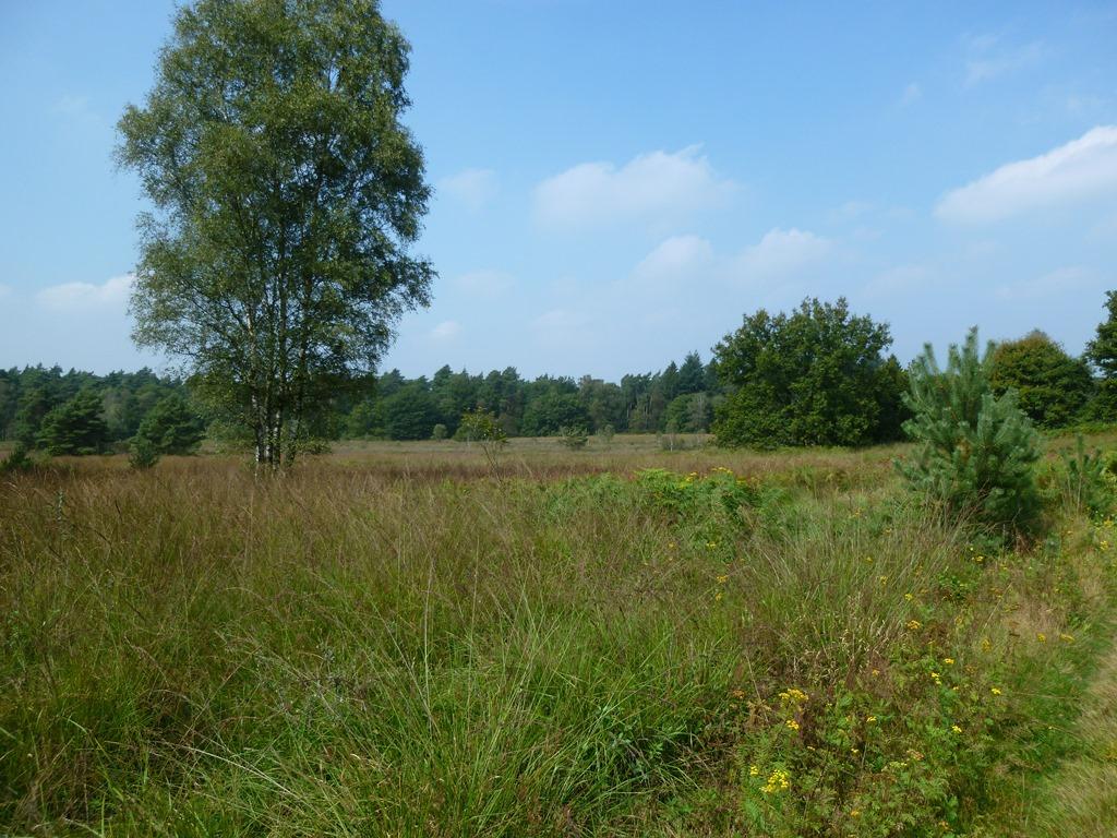 Nationaal Park De Meinweg
