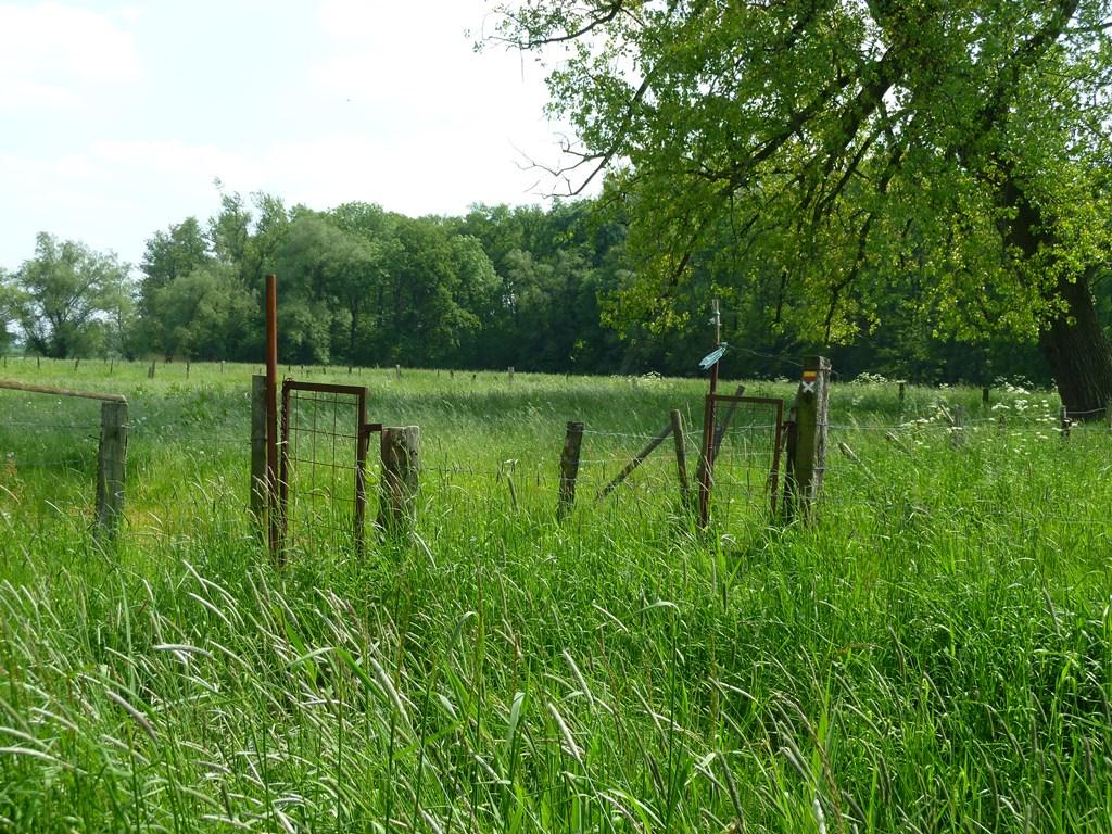 Hoog gras, niet druk