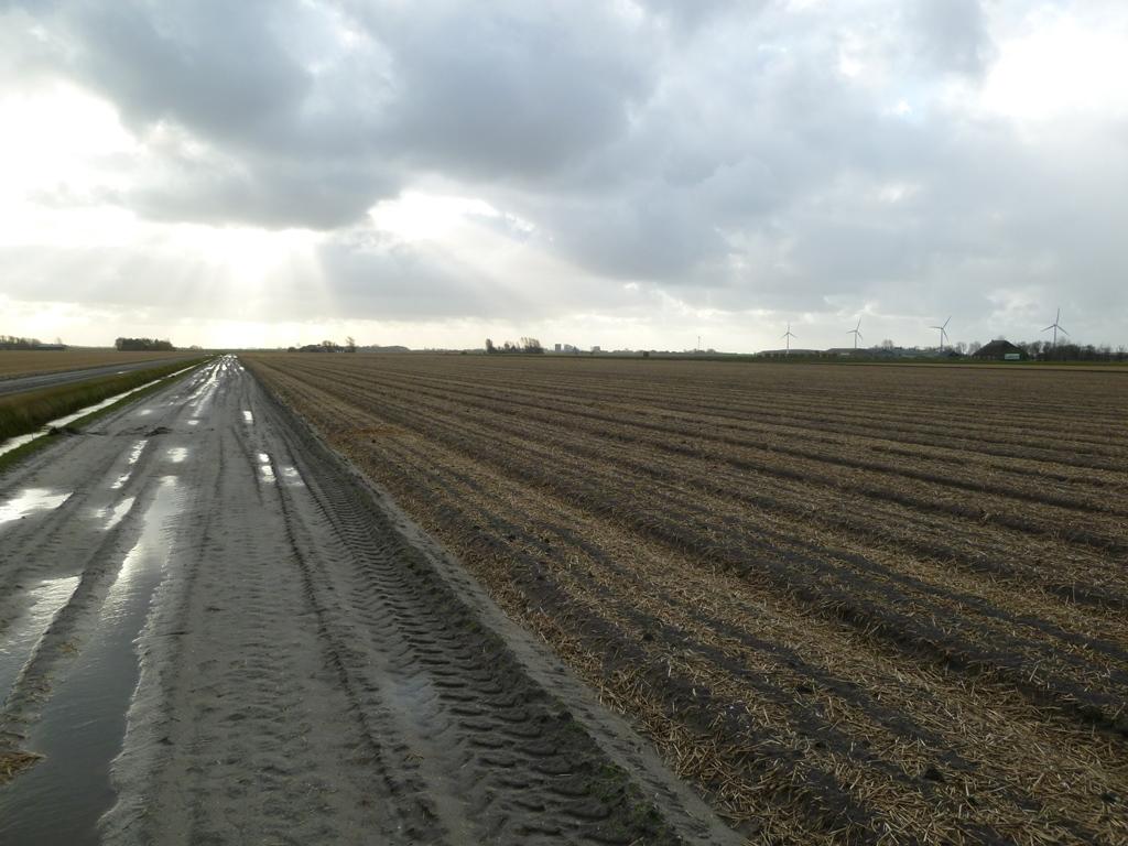 Bollenvelden (in december)