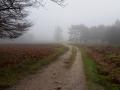 Wezepsche Heide