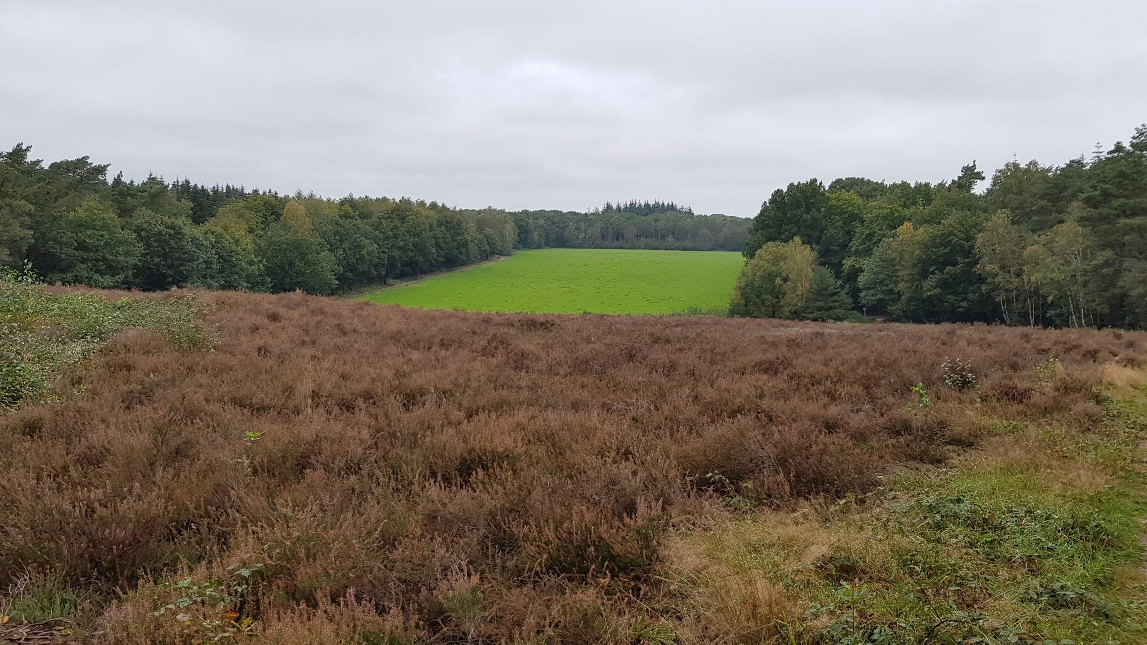 Neerlands Midden