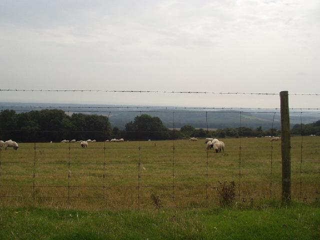 Bignor Hill