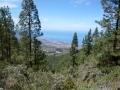 Tenerife - Los Organos