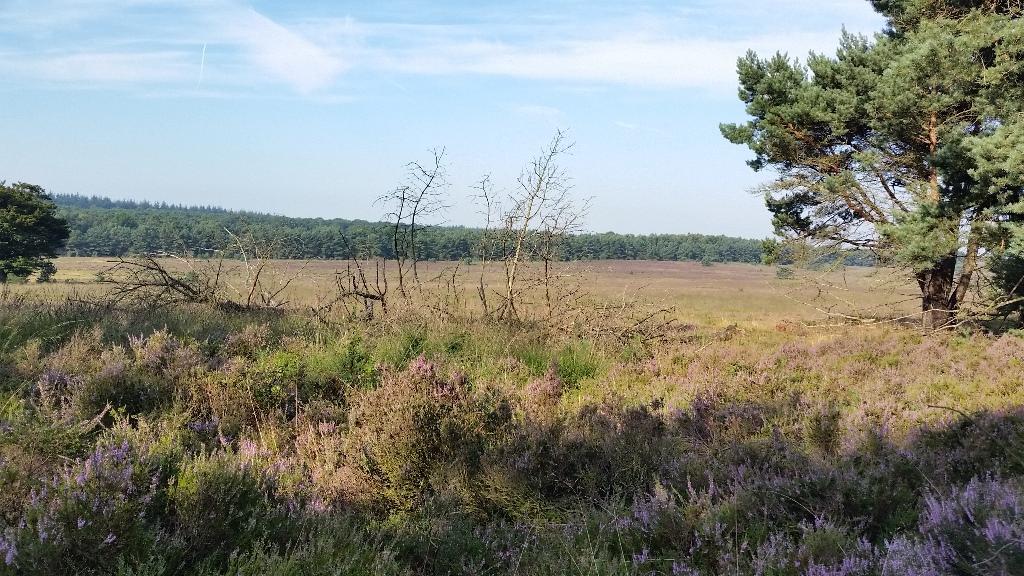 Asselse Heide