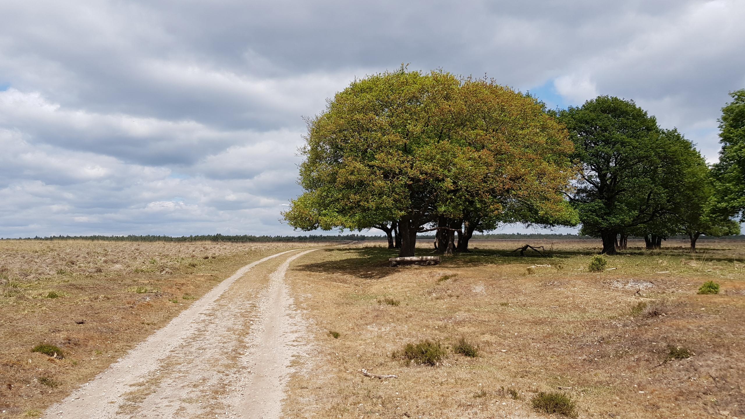 Terletse Heide