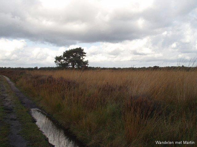 Elspeetse Heide