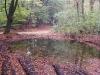 Het Hoenderloose Bos