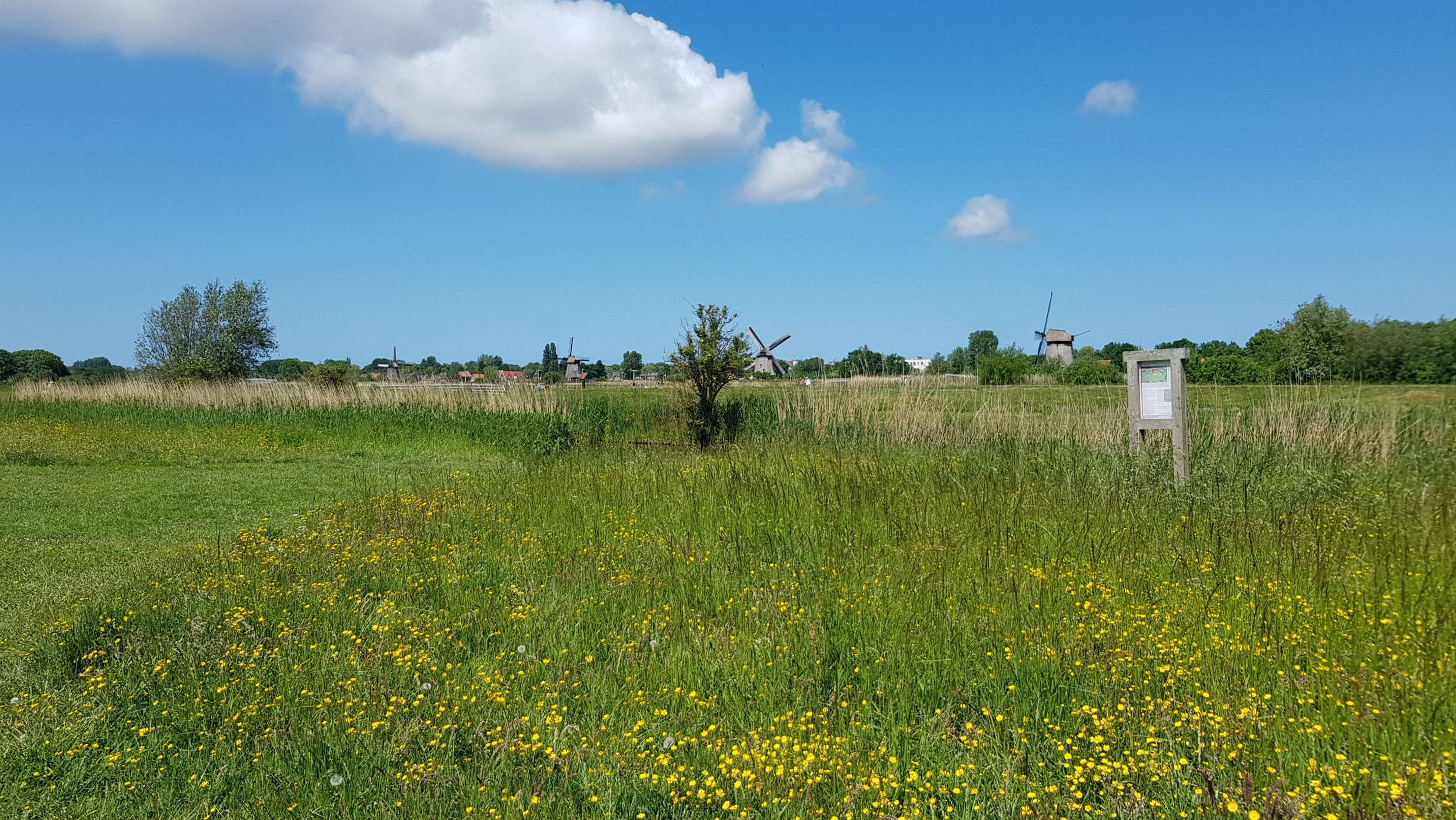 Oudorperhout