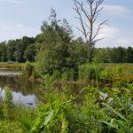 Krickenbecker Seen