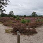 Boswachterspad Stulp en Kasteeltuinroute